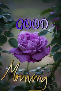 In today's post, we are presenting good morning msg. If you are searching for good morning msg you are welcome to our website. Good Morning In Spanish, Good Morning Happy Saturday, Special Good Morning, Good Morning Funny, Thursday Morning, Good Morning Beautiful Pictures, Good Morning Images Flowers, Good Morning Picture, Beautiful Morning