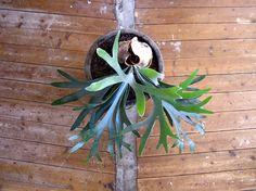 plants - mieke verbijlen