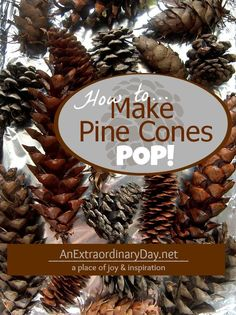 Don't buy pine cones. Gather up some from nature's bounty and follow these easy directions to dry and debug pine cones. #pinecones