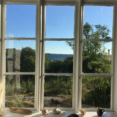 Grønne Øjne — wilderflowers: the view from the summer house on. European Summer, Window View, Through The Window, Summer Dream, Baltic Sea, Humble Abode, Summer Vibes, Future House, Interior And Exterior