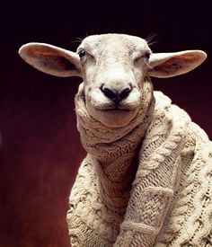 This sheep in a sweater makes me smile!