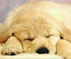 Ook honden hebben zware dagen