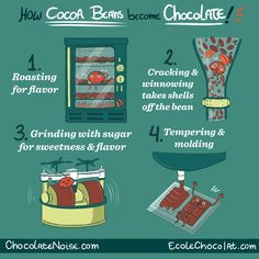 bean2bonbon post - How Cocoa Beans become Chocolate! Part 2 in a series of educational chocolate infographics we created with Megan Giller of Chocolate Noise!