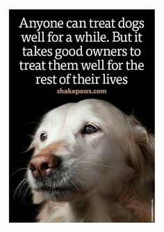 This here is so true stop abusing animals amen