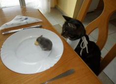 """""""From Now I'll Diet… Oh! Look! A little Mouse!!!"""""""