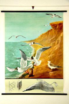 Seagull vintage original canvas print poster chart mid century modern german