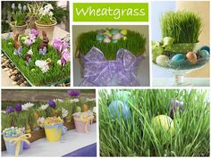 Grow your own wheatgrass by Everyday Art