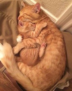 Marmalade cats for the win! – Janet Carr @ - Marmalade cats for the win! – Janet Carr @ Marmalade cats for the win! Cute Baby Cats, Cute Little Animals, Cute Cats And Kittens, Cute Funny Animals, Kittens Cutest, Funny Cats, White Kittens, Black Cats, Cute Kitty