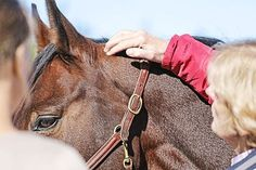 CAVALLO 7 Physiogriffe fürs Pferd zum Nachmachen