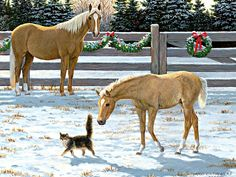 Persis Clayton Weirs / Fillies & Colts / December 2014