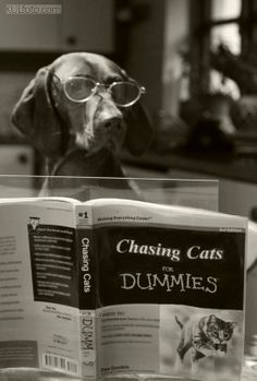Chasing Cats for Dummies...