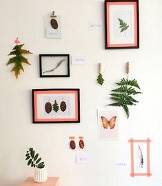 V & D indoor herbarium