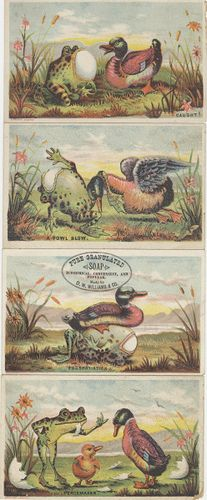https://flic.kr/p/5HnhSL | D.W. Williams & Co. (Manufacturers) | Persistent URL: digital.lib.muohio.edu/u?/tradecards,155 Subject (TGM): Ducks; Birds; Frogs; Toads; Amphibians; Eggs; Birds' eggs & nests; Household soap; Cosmetics & soap; Cartoons (Commentary); Chemical industry; Humorous pictures;