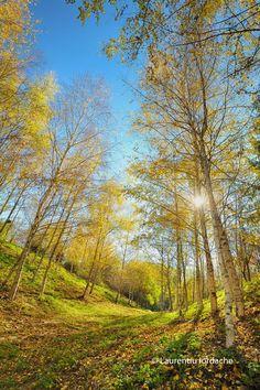 autumn in forest Autumn, Nature, Photography, Naturaleza, Photograph, Fall Season, Fotografie, Fall, Photoshoot