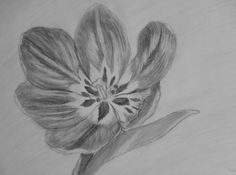 Bloom by 8manu on DeviantArt