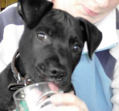 One Last Plea to the City of Belfast: Save Lennox and Save Face