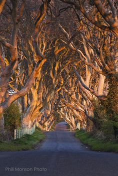 The Dark Hedges, 300 year old Beech trees, line the Breagah Road in Northern Ireland. Photo by Phill Monson Beautiful World, Beautiful Places, Trees Beautiful, Simply Beautiful, Fuerza Natural, Magic Places, Tree Tunnel, Beech Tree, Nature Tree