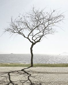 . ➖➖➖➖➖➖➖➖➖➖➖➖ Simplicidade é... Renovação . 🎧 Empires | #HillsongUnited ➖➖➖➖➖➖➖➖➖➖➖➖ . #MotoFoto #MinimalismoEmFoco . . . . . . . . . . . . #BrasilFolk #Simplicity #Minimalism #BRMinimalism #Trees #Floripa #NatureLovers #NothingIsOrdinary #FotoMissao #Transfer_Visions #BasicShoot #Click_Vision #TV_Living #TV_Simplicity #IHaveAThingForShadows #SoulMinimalist #AchadosDaSemana #BomDia #RSA_Minimal #Arte_Minimal #Minimalha