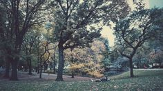 Last moment to sleep on the grass of the year #nyc #vsco #fall