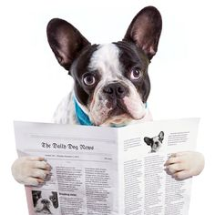 Our April newsletter has just been sent to our subscribers, click the link to read http://eepurl.com/bklXSL. If your dog is chewing you out of house and home, you may find one of our articles interesting. If you would like to receive our monthly newsletter click the subscribe button through the link. It is up the top on the left.