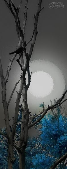 """""""When the night, has come  And the land is dark,  And the moon, is the only light we'll see""""  Stand by Me. - Ben. E. King  #moonlight #romantic #photography #tree #artwork #art #trishahoque"""