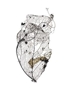 Black and white photography, leaf skeleton, fragile natural forms. At This Rate « Design in Surreal Leaf Skeleton, Earring Trends, A Level Art, Leaf Art, Botanical Illustration, Textures Patterns, Art Inspo, Nature Photography, White Photography