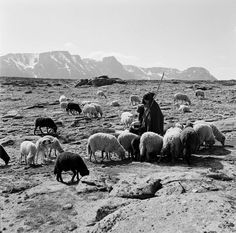 Artur Pastor : Fotografia -  Serra da Estrela, década de 50. Old Pictures, Old Photos, Portugal Country, As Time Goes By, Photo P, Portugal Travel, North Africa, Sheep, Images
