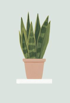 Plantas de interior y exterior con grandes beneficios Plant Painting, Plant Drawing, Plant Art, Photoshop, Tropical Art, Iphone Background Wallpaper, Watercolor Leaves, Aesthetic Design, Plant Illustration