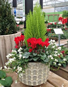 Lovely holiday Pot of Color at Abide-A-While Garden Center