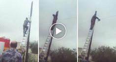 Como Os Bombeiros Da Jordânia Salvam Um Gato Do Topo De Um Poste