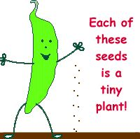Girl Scout Junior Gardening resource University of Illinois extension Each of these seeds is a tiny plant