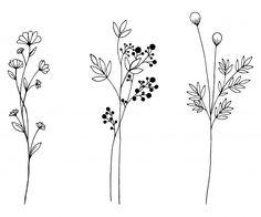 Hand drawn of vector vintage flowers elements isolated on white background. - Hand drawn of vector vintage flowers elements isolated on white background. Down… Hand drawn of vector vintage flowers elements isolated on white background. Botanical Line Drawing, Floral Drawing, Simple Flower Drawing, Drawing Flowers, Flower Drawings, Simple Flower Tattoo, Flower Drawing Tutorials, Plant Drawing, Painting Flowers