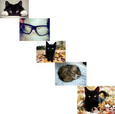"""""""CATS LOL"""" by carrot-girl-03 ❤ liked on Polyvore"""