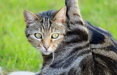 cat yoga pictures - Google Search