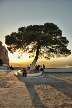 The tree of life, Constantine, Algeria - probably impossible but would be AMAZING