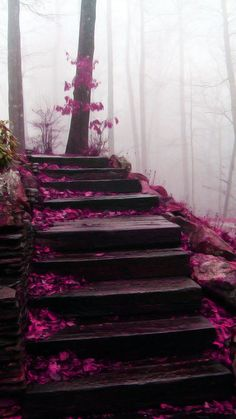 Mystical Stairs ~ Blue Ridge Mountains, North Carolina