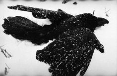 "Masahisa Fukase : ""The Solitude of Ravens"" (Photography) 