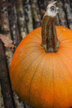 ~*- Gresskar -*~ (Amariel of the Woodlands) October 2014 October 2014, Pumpkins, Woodland, Gardening, Blogging, Lawn And Garden, Pumpkin, Squash, Horticulture