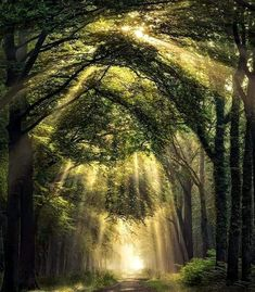 Mushroom Plant, Tree Mushrooms, Heavenly Places, Light Rays, Beautiful Images, Wonders Of The World, Netherlands, Waterfall, Country Roads