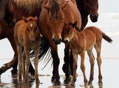 *** Horses family *** - kon, kiziaki, zwierzeta, konie