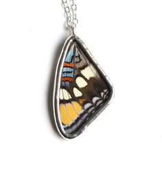 REAL Butterfly Wing Necklace. Arizona Sister Butterfly