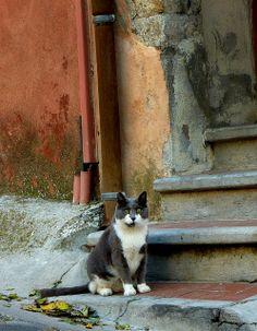 Straycat in Hyeres (France) by straycatspotter, via Flickr
