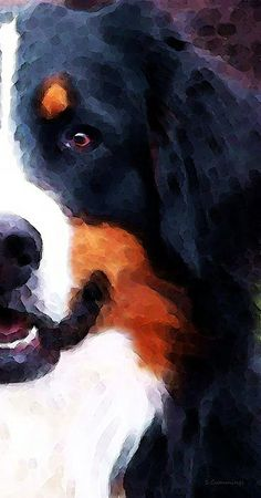 Bernese Mountain Dog - Half Face Painting by Sharon Cummings - Bernese Mountain Dog - Half Face Fine Art Prints and Posters for Sale