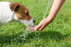 Iată un ghid dedicat îngrijirii corespunzătoare a animalelor de companie pe timpul verii. Ține cont de aceste sfaturi, dacă îți dorești ca prietenul tău blănos să fie pe deplin fericit în acest sezon: