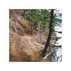 Spruce Railroad Trail Olympic National Park Canvas Print