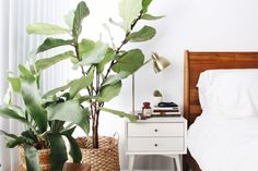 Bringing the Outdoors In: Indoor Plant Care