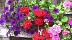 estas son las flores de mi huerto