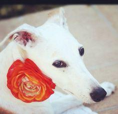 Orange wedding Dog Collars - Orange Floral Dog Collar with Rhinestone with High quality leather collar on Etsy, $35.00