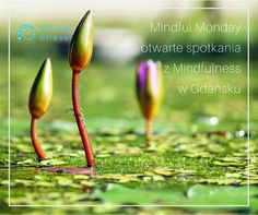 Wprowadzenie do Mindfulness @ Klinika Stresu - 24-July https://www.evensi.com/wprowadzenie-do-mindfulness-klinika-stresu/218981514