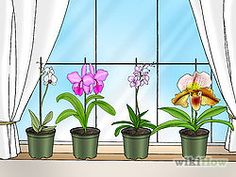 6 Ways to Care for Orchids - wikiHow